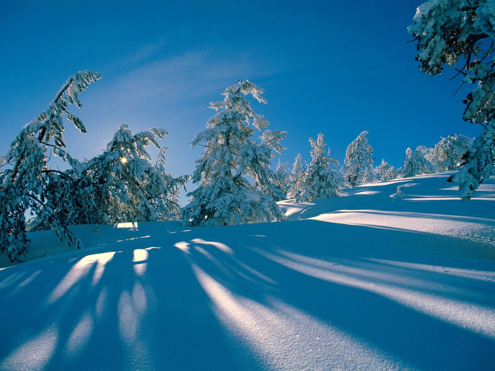 Mooi sneeuw landschap