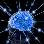 Brain_1713803